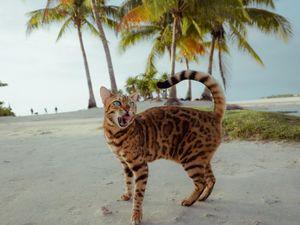 Mèo đi du lịch, check-in khắp thế gian cùng chủ