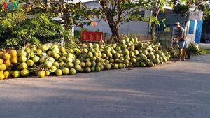 Dừa Xiêm ĐBSCL rớt giá thê thảm trong mùa đại dịch