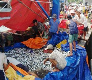 Quảng Ngãi: Giải cứu hơn 5 tấn hải sản cho ngư dân cứu nạn trên biển