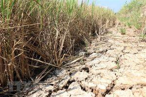 Xâm nhập mặn ở khu vực Đồng bằng sông Cửu Long tăng trở lại