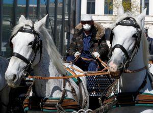 Công việc mới của những chú ngựa kéo tại thủ đô Áo mùa dịch COVID-19