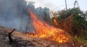 Nguy cơ cao xảy ra cháy rừng ở các tỉnh, thành miền Trung