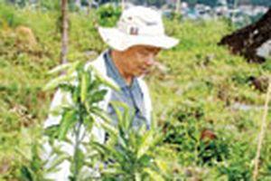 Làm giàu nhờ trồng cây hiếm: Cam không hạt