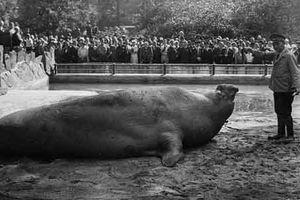 Ảnh hiếm vườn thú Copenhagen ở Anh những năm 1930