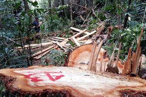 Công an tố biên phòng ngăn cản kiểm tra kho chứa gỗ lậu
