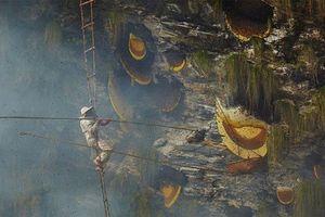 Hãi hùng cảnh thợ săn mật đối diện những con ong 'sát thủ'
