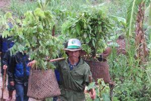 Sơn La: Hàng ngàn người đội mưa trồng cây dịp sinh nhật Bác