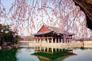 Hàn Quốc giản lược thủ tục thị thực đối với công dân Việt Nam