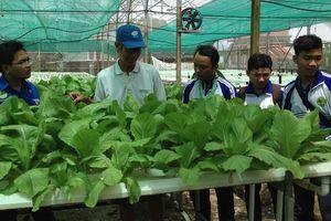 Giúp nông dân làm nông nghiệp kỹ thuật cao
