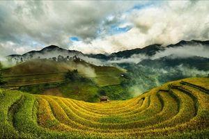 Tuyệt đẹp bộ ảnh Tây Bắc mùa lúa chín rực rỡ sắc vàng