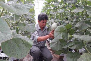 Vì sao sản xuất nông sản theo chuẩn GAP khó tiêu thụ?