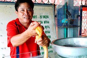 Nông dân bắt được con lươn vàng óng được trả 10 triệu vẫn không bán