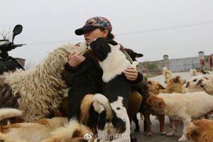 Người phụ nữ bỏ việc để chăm sóc 1.300 chú chó hoang