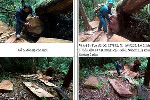 Nhiều vụ phá rừng tại khu vực biên giới Kon Tum