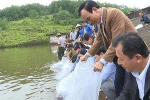 Tái tạo nguồn lợi thủy sản, hơn 22.000 con cá giống được thả xuống hồ