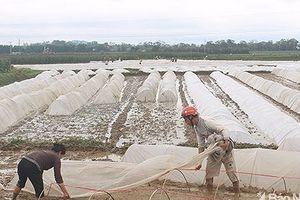Nghệ An phấn đấu đạt trên 100.000 tấn lương thực vụ Xuân 2018