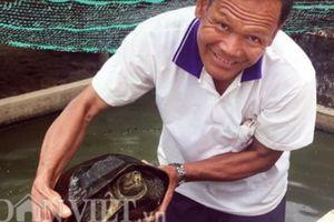 Lạ mà hay: Lão nông miền Tây nuôi hàng trăm con rùa 'khủng'
