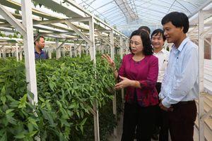 Kiểm tra nông thôn mới và thăm mô hình sản xuất nông nghiệp CNC tại huyện Thạch Thất
