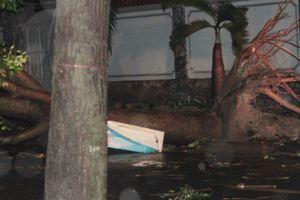 Người Sài Gòn 'sợ bão' khi cây xanh ngã đổ, kẹt xe nghiêm trọng sau mưa to