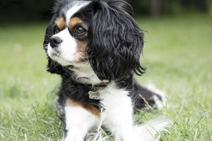 Nghiên cứu mới: Muốn khỏe mạnh, hãy sở hữu một chú chó
