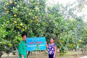 Tạo dựng thương hiệu cam VietGAP của Hà Tĩnh