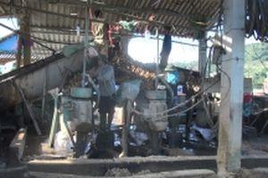 Bất cập trong phát triển cây dong riềng ở Điện Biên