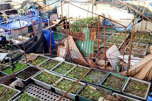 Đảo Trường Sa khắc phục hậu quả bão số 16 đón Tết Mậu Tuất