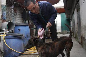 Quy định nuôi chó phải đăng ký, liệu có nằm trên giấy ?