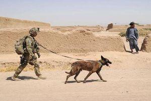 Thiếu chó nghiệp vụ, Quân đội Mỹ tính 'nuôi' cả chó robot