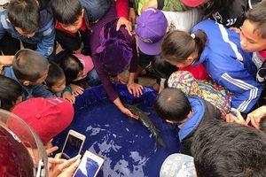 Đã bắt được con cá bị đồn thổi là 'cá thần' gây xôn xao ở Nghệ An