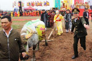 3 trâu đoạt giải trang trí vinh dự cày ruộng trong lễ hội Tịch Điền
