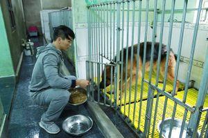 Ước mơ của chàng trai cứu hơn 200 con chó hoang, bệnh tật mỗi năm