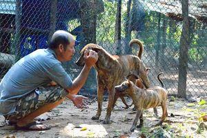 Chó Phú Quốc - từ Đảo đến Đồn