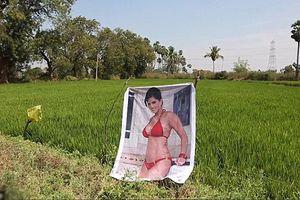 Treo ảnh nữ diễn viên phim nóng quanh ruộng để đuổi... trộm