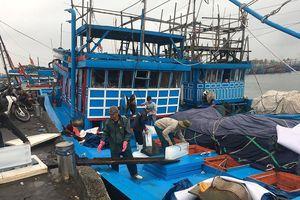 Cảng cá lớn nhất miền Trung hối hả ra khơi đầu năm