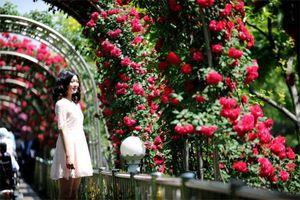 Lễ hội Hoa hồng Bulgaria lần II tại Hà Nội