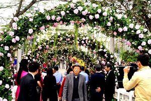 Ban tổ chức lễ hội hoa hồng 2018 cam kết trưng bày hoa thật