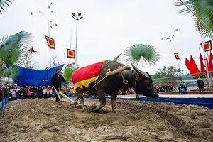 Chen lấn, cướp lộc trong Lễ hội Lồng Tông của dân tộc Tày
