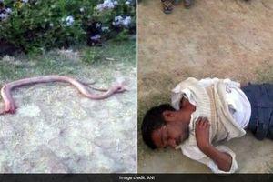 Nhai đầu rắn để trả đũa sau bị cắn, người đàn ông nhận cái kết đắng