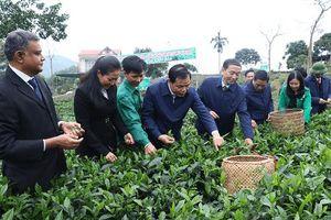 Lễ hội 'Hương sắc trà xuân – Vùng chè đặc sản Tân Cương' năm 2018