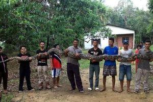 7 người đàn ông hợp sức bắt con trăn nặng 80kg ra khỏi giếng