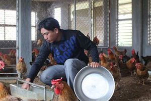 Cử nhân về quê ở nhà cấp 4, 'nhường' nhà tầng cho...gà