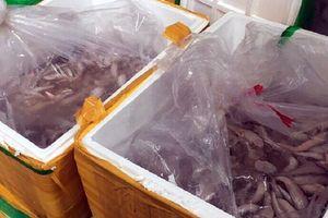 Tiêu hủy gần 1 tấn cá đông lạnh không rõ nguồn gốc