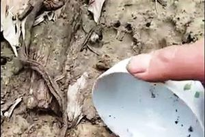 Quảng Trị: Xuất hiện vết chân báo hoa mai, 13 con dê mất tích