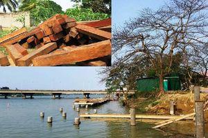 Chuyên gia thực vật học 'mổ xẻ' loại gỗ lim lát đường 'siêu sang' ở Huế
