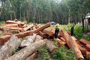 Đắk Nông bắt giữ tượng phá rừng trái phép