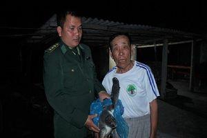 Rùa biển 10 kg mắc lưới được thả về đại dương trong đêm