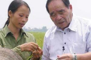 Cơ hội 'vàng' để nông dân Việt Nam trồng lúa Nhật tại chỗ