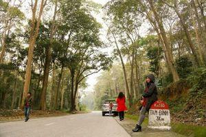Nghệ An: Độc đáo rừng nguyên sinh Tam Đình