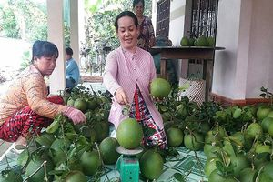 2 loại trái cây đặc sản của Bến Tre được chứng nhận chỉ dẫn địa lý